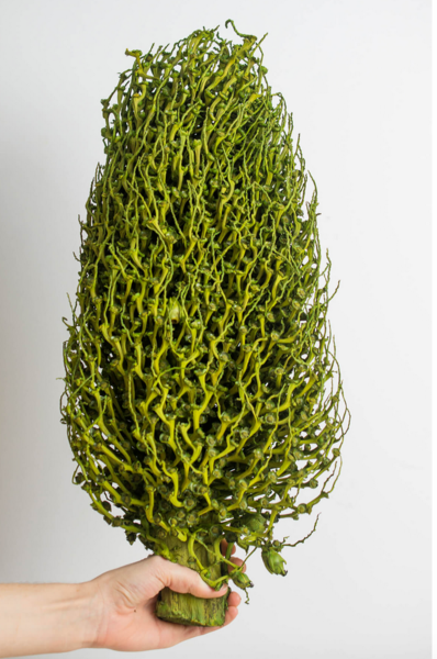 https://www.save-on-crafts.com/seed-pod-olimpia-16-22in-basil.html