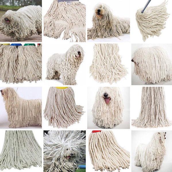 sheepdog or mop