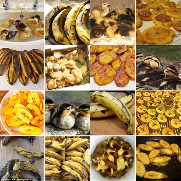 duckling or plantain