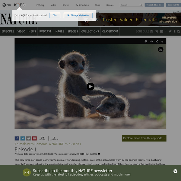 This new three-part series journeys into animals' worlds using custom, state-of-the-art cameras worn by the animals themselves. Capturing never-before-seen behavior, these animal cinematographers help expand human understanding of their habitats and solve mysteries that have eluded scientists until now. In the first episode, astonishing collar-camera footage reveals newborn Kalahari Meerkats below ground for the first time, ...