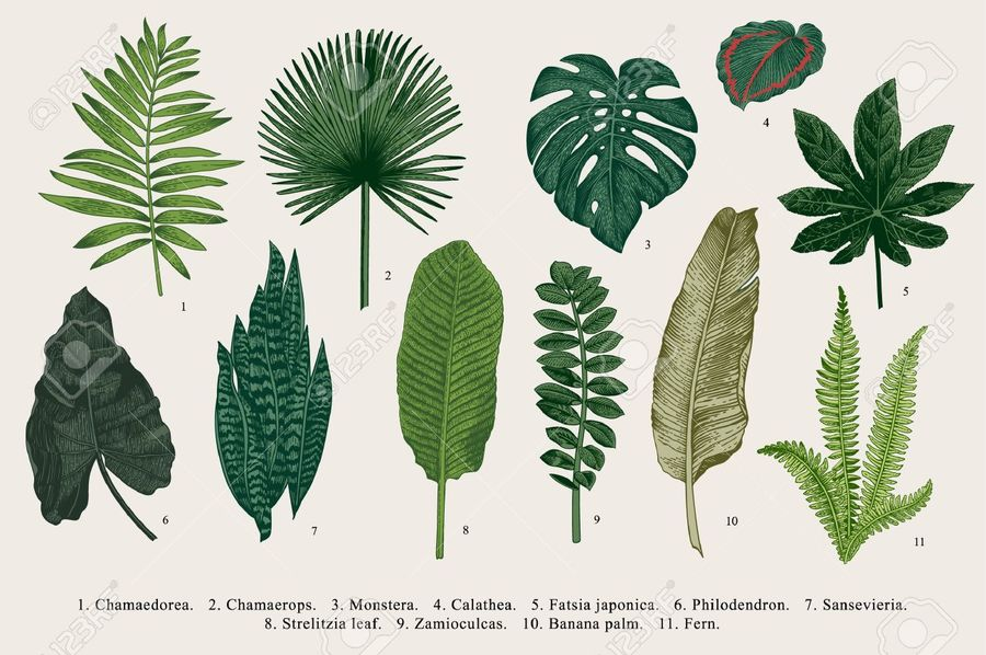 64837578-set-leaf-exotics-vintage-vector-botanical-illustration-colorful-.jpg