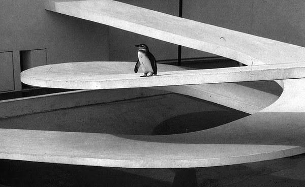 penguin-pool-lubetkins-archeyes-12.jpg