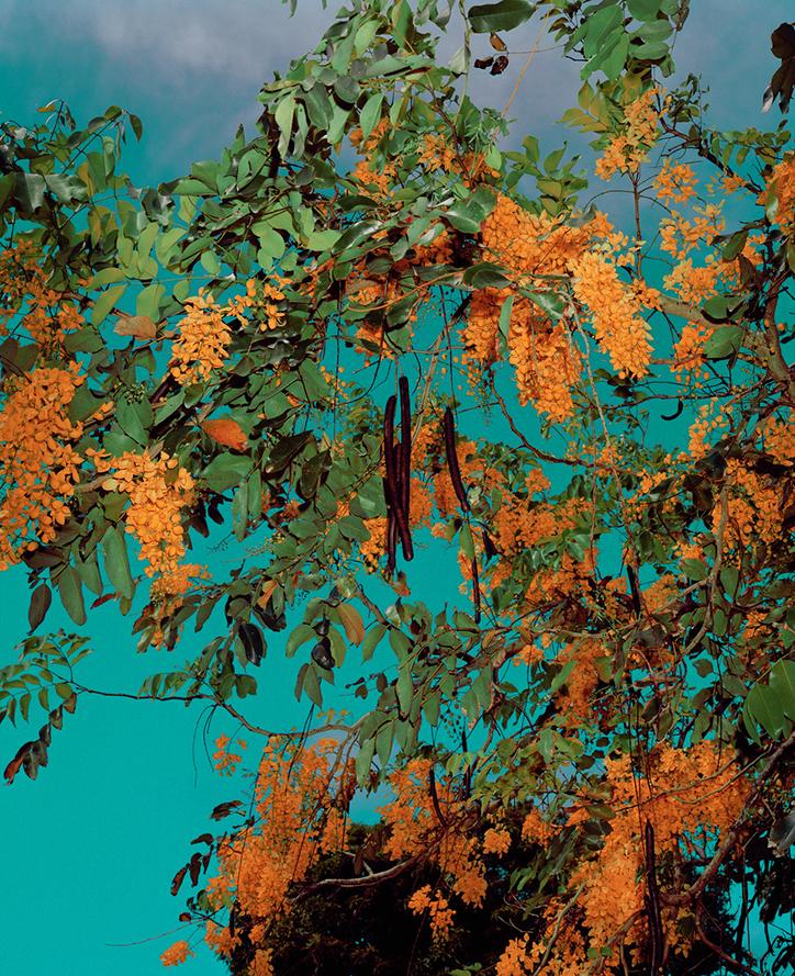Goldtree.jpg