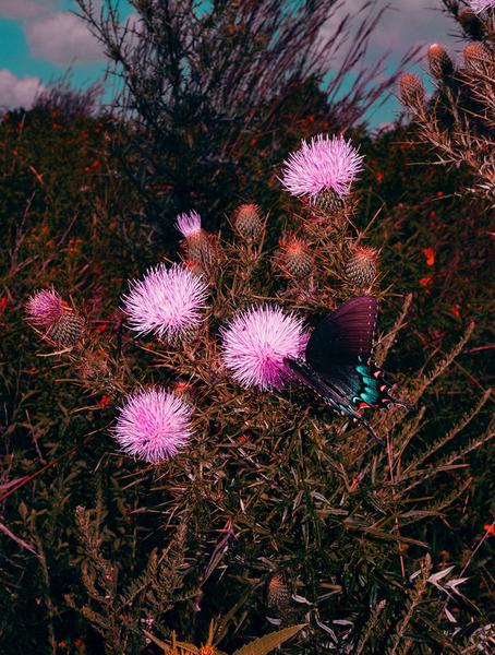 brandondavidko-photography-itsnicethat-Eclipse_Butterfly.jpg