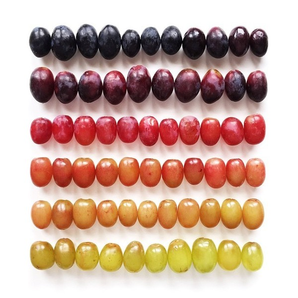 Gradient Food Photography By Brittany Wright