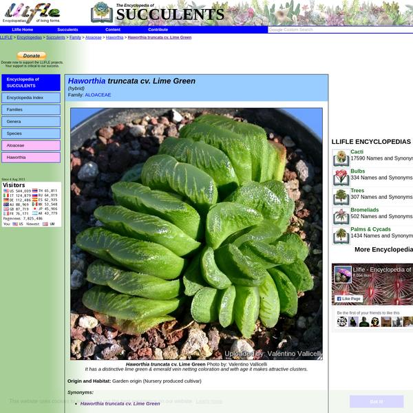 LLIFLE > Encyclopedias > Succulents > Family > Aloaceae > Haworthia > Haworthia truncata cv. Lime Green