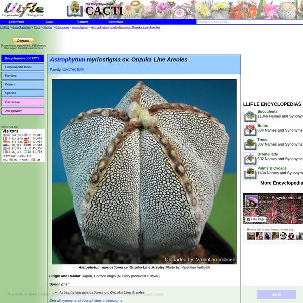 LLIFLE > Encyclopedias > Cacti > Family > Cactaceae > Astrophytum > Astrophytum myriostigma cv. Onzuka Line Areoles