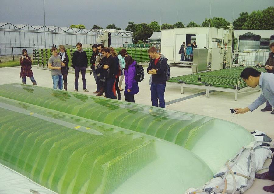 #algaeharvesting #netherlands