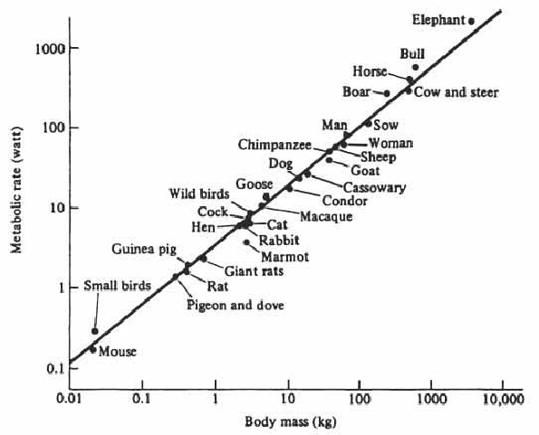 The-mouse-to-elephant-curve-Metabolic-rates-of-mammals-and-birds-are-plotted-versus-the.png