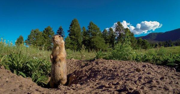 Can Prairie Dogs Talk?