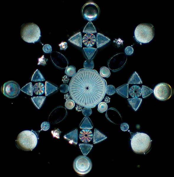 Exhibition Mount of Arranged Diatoms, imaged using Darkfield lighting techniques  http://www.victorianmicroscopeslides.com/slidedia.htm