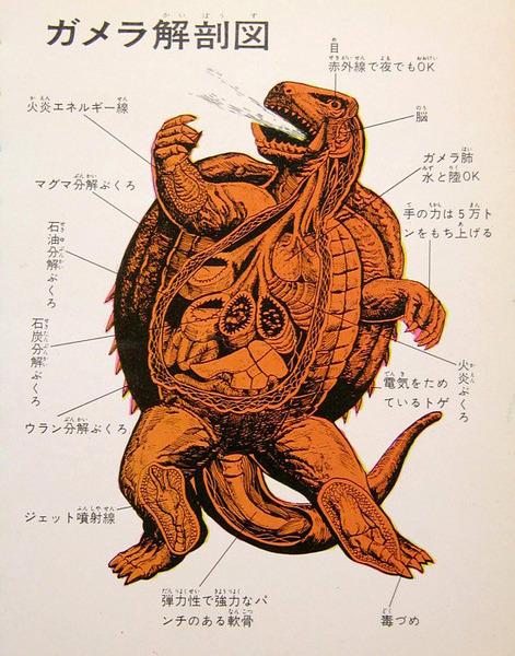 swampthingy: Illustrated anatomy of Gam...