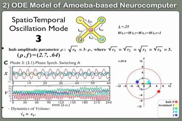 Amoeba NeuroComputing (Part 2) [True Slime Mold Physarum]