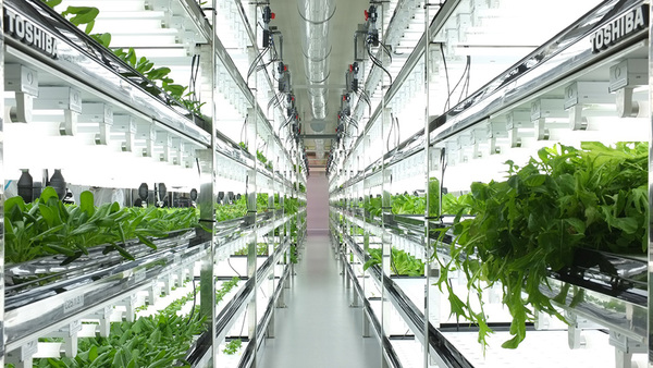 Toshiba-Hydroponic-Systems-Photo-by-Dan-Frommer-of-Quartz-1.jpg