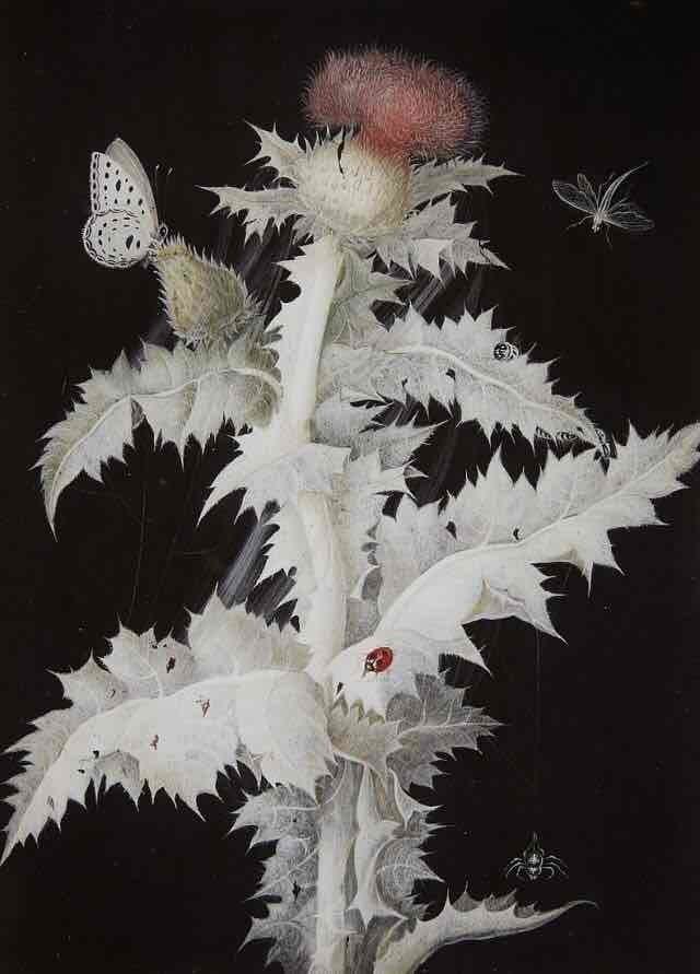 Barbara Regina Diezsch, A Thistle Branch with a Butterfly, Dragonfly, Ladybird and Spider 🕷