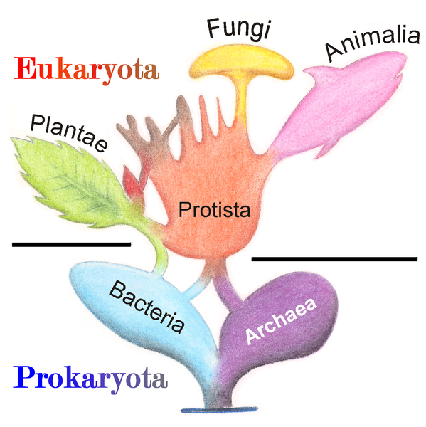 Tree_of_Living_Organisms_2.png