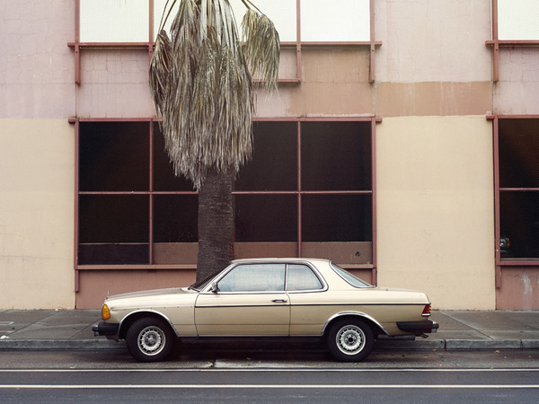 leaves-tree-palm-tree-car-grey-pale-pink-lonely-empty-flat-plaster-nature-city-civilisation-window-gold-grid-symmetry...