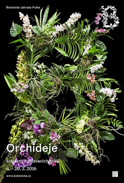 4955-botanickazahradaorchid16clv.jpg