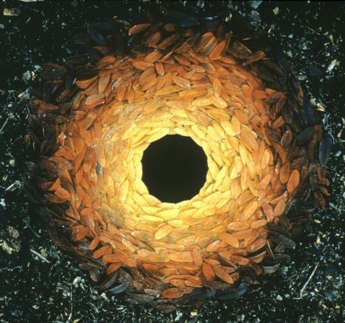 Cave-to-Canvas-Andy-Goldsworthy-Rowan-Leaves-Around-A-Hole-1987.jpeg