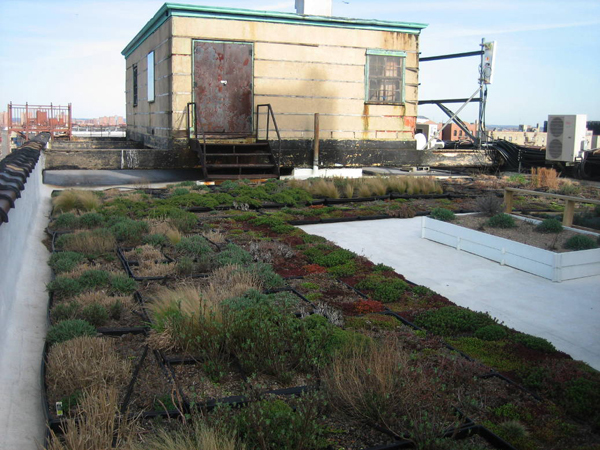 57. Environmental Justice for the South Bronx