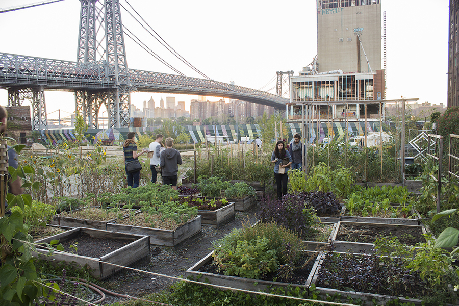 Occupying the footprint of the iconic Domino Sugar refinery building on the East River, North Brooklyn Farms creates agricultural green spaces where people connect with nature and one another. After over 150 years of private ownership, North Brooklyn Farms has opened this space to the public, offering weekly farm stands, farm to table dinners, community volunteer days, musical performances & other public and private events.  Organization: [North Brooklyn Farms](http://www.northbrooklynfarms.com/) Year: 2017 Location: Brooklyn, NY Image credit: North Brooklyn Farms  Presented at [IdeasCity New York](http://www.ideas-city.org/new-york/about/)