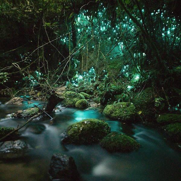 Waitomo Glow Caves