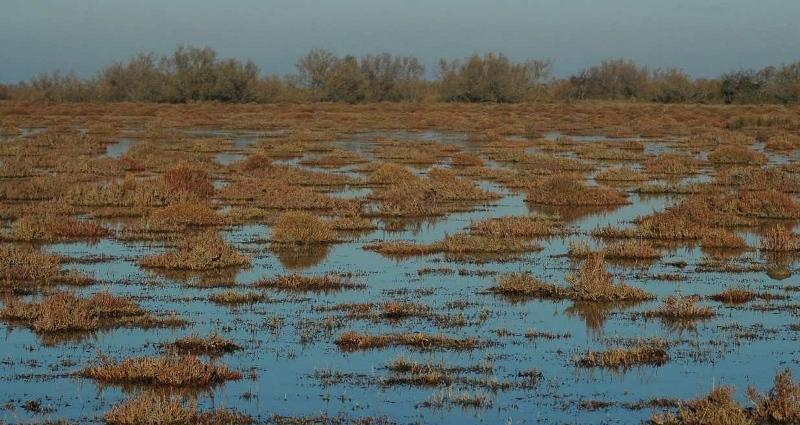 95. Learning from the Mediterranean Wetlands