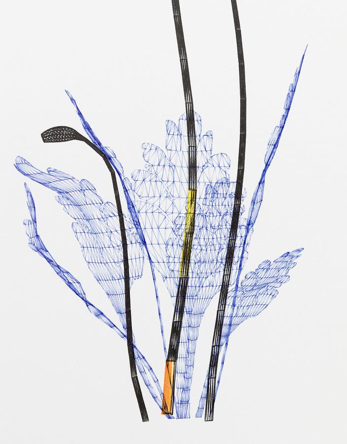 Papaver Somniferum (detail)