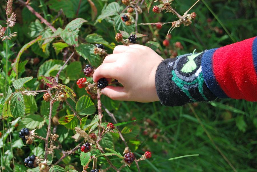 foraging-for-the-juciest-berries.jpg