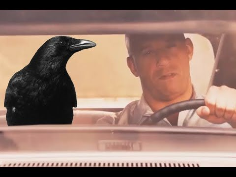 You'll always be my brother. I saw the crow flying outside car video and thought it would mash well with the fast and furious final scene template. Fast and furious 7 scene: https://www.youtube.com/watch?v=DI38zX3irpE Crow eating biscuit video: https://streamable.com/rk9j8 Ofcourse props to Dolan Dark for the template inspiration: https://www.youtube.com/watch?v=E4_Pd1kDojA Check out my channel for more vids and memes.