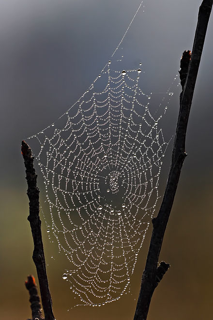 440px-spider_web_with_dew_drops.jpg