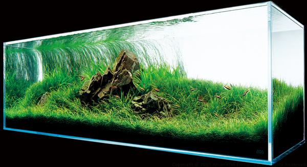 Amano Takashi - Nature Aquarium