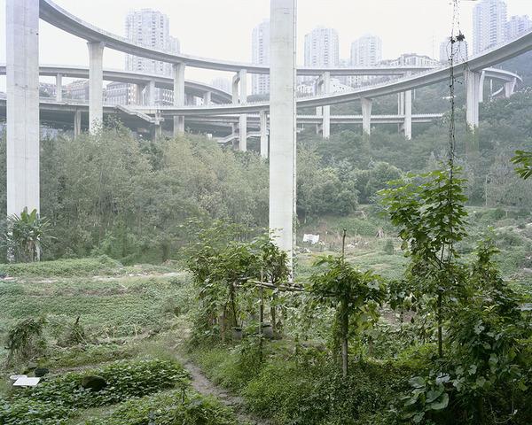 Yan Wang Preston. Allotments under Caiyuanba Bridge, 2017 http://www.yanwangpreston.com/projects/forest-images