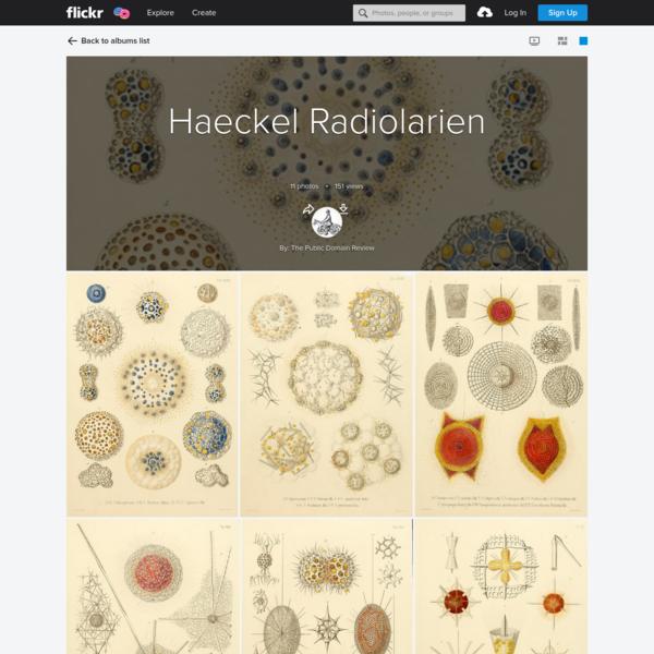Haeckel Radiolarien
