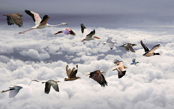 flying-bird-wallpaper.jpg