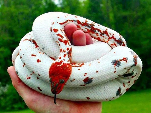 293a7b08c7e60cf1a2f797f0be2e4d51-colorful-snakes-beautiful-snakes.jpg