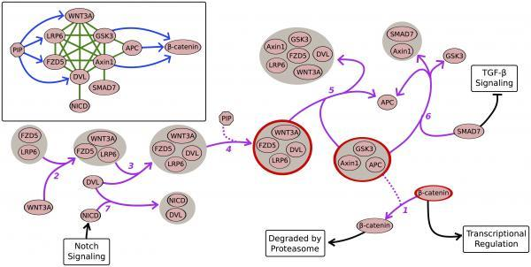 wnt-pathway-with-bcat-degradation.jpg