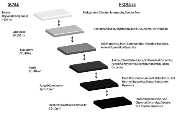 concepts-of-hierarchy-and-scale-in-ecosystems-the-relationship-between-scales.png