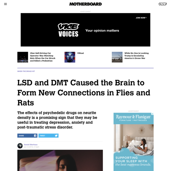 LSD and DMT Caused the Brain to Form New Connections in Flies and Rats - Motherboard