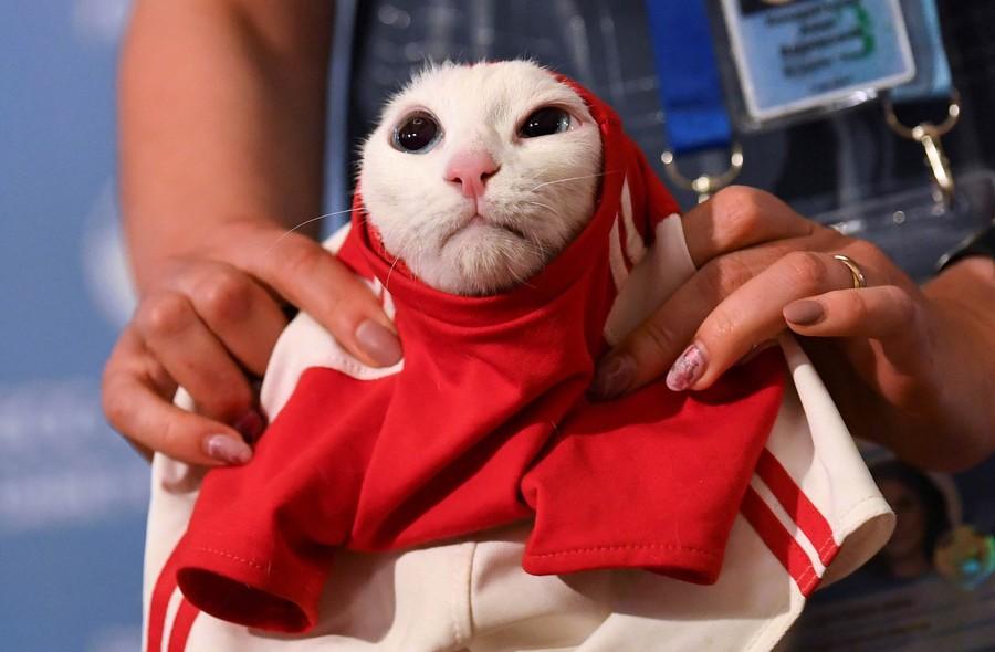 gato-copa.jpg