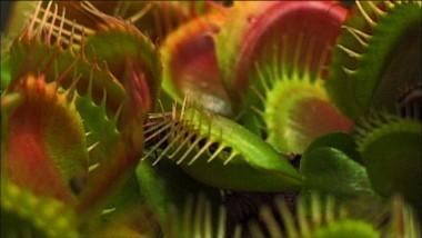 venus-flytrap.jpeg