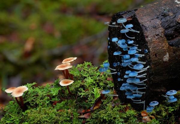doorofperception.com_steve_axford-fungi-mushrooms-50-840x577.jpg