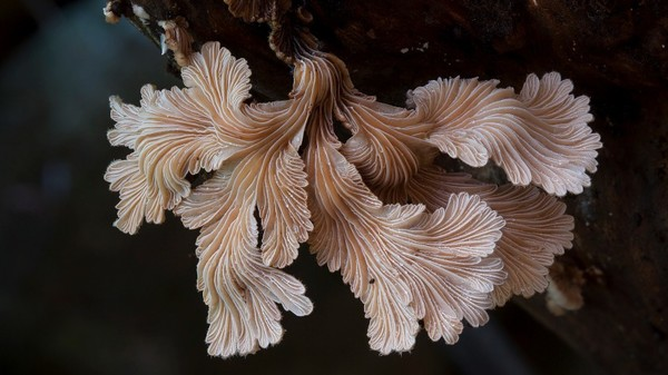 doorofperception.com_steve_axford-fungi-mushrooms-65-840x472.jpg