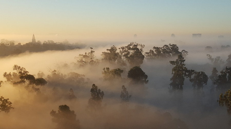 """Early morning fog rolled through San Diego's Balboa Park."" —Calofirnia Today's caption for this Scott Opis photo"