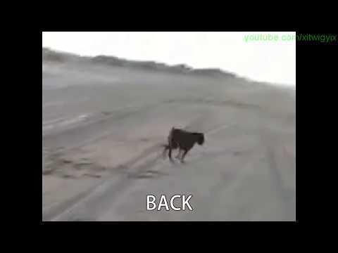 Dog Won't Listen To Owner (Funny Subtitle Version)