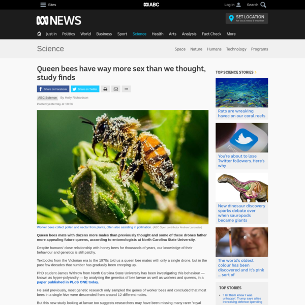 Queen bees have way more sex than we thought
