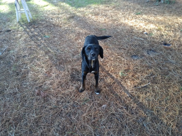 Lui c est bronzzo, le chien sauvage qui vient me voir tous les jours. C est un mélange entre stronzo et bronzzo :)