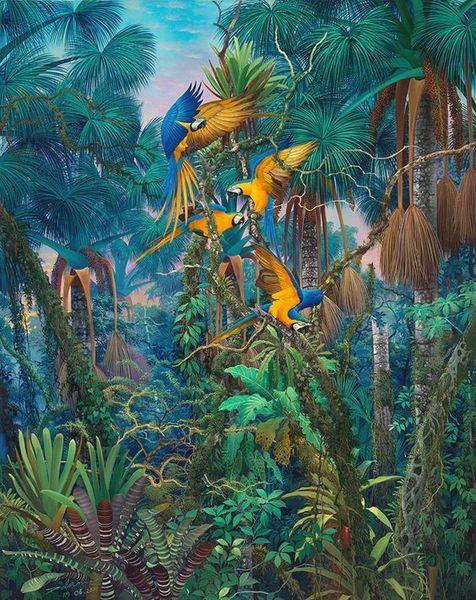 Rainforests , Anderson Debernard