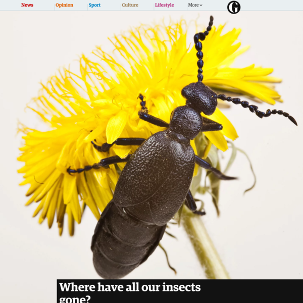 Where have all our insects gone?