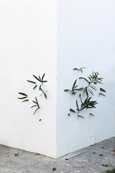 8.plantaparet.jpg